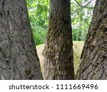 trees in the park. three large  ... | Shutterstock . vector #1111669496