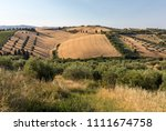 panoramic view of olive groves... | Shutterstock . vector #1111674758
