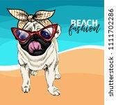 vector portrait of pug dog... | Shutterstock .eps vector #1111702286
