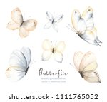 collection of flying gentle... | Shutterstock .eps vector #1111765052