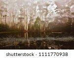 eucalyptus viminalis or manna... | Shutterstock . vector #1111770938