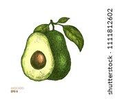colored avocado botanical... | Shutterstock .eps vector #1111812602