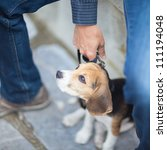 Stock photo cute little puppy on a leash 111194048