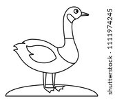 Wild Canadian Duck Icon