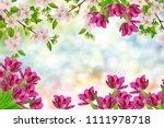 blossoming branch apple. bright ... | Shutterstock . vector #1111978718