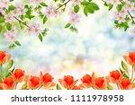 blossoming branch apple. bright ... | Shutterstock . vector #1111978958