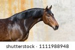 Portrait Of A Bay Horse On...