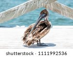 closeup of juvenile eastern... | Shutterstock . vector #1111992536