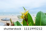 plumeria flower on the beach... | Shutterstock . vector #1111995212