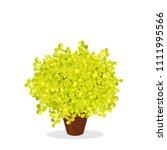 lime glow japanese barberry... | Shutterstock .eps vector #1111995566