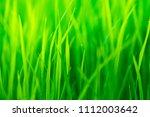 green grass abtract background   Shutterstock . vector #1112003642