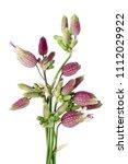 striped pink summer flowers... | Shutterstock . vector #1112029922
