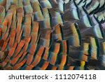 feather art wild turkey | Shutterstock . vector #1112074118