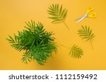 little palm tree on bright... | Shutterstock . vector #1112159492