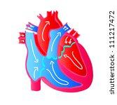 blood flow of a human heart | Shutterstock .eps vector #111217472