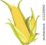 two corncobs isolated on the... | Shutterstock .eps vector #111220052