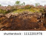 Cross-section of an Irish peat bog showing heather and plants on top