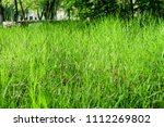 juicy green grass in the sun ... | Shutterstock . vector #1112269802