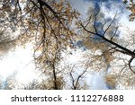 golden autumn forest view from... | Shutterstock . vector #1112276888