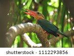 stork billed kingfisher ... | Shutterstock . vector #1112293856