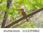 stork billed kingfisher ... | Shutterstock . vector #1112293862
