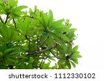 green leaves isolated on white | Shutterstock . vector #1112330102