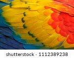 close up detail of parrot...   Shutterstock . vector #1112389238