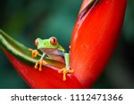 agalychnis callidryas tropical... | Shutterstock . vector #1112471366