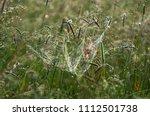 dewy dense entangled spider web ... | Shutterstock . vector #1112501738
