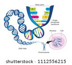 the schematic illustration... | Shutterstock . vector #1112556215