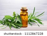 fresh tea tree and essential oil | Shutterstock . vector #1112867228