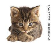 Stock photo cute kitten licking its paw on white background 111287978
