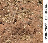 Small photo of Patch of Dirt with Critter Holes Tunnels Burrows