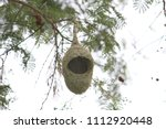 waver bird nest    Shutterstock . vector #1112920448