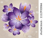 romantic lilac crocus with... | Shutterstock .eps vector #1112933066