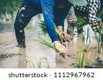 men being transplant rice... | Shutterstock . vector #1112967962