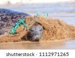 Plastic Marine Pollution. Seal...