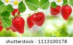 farming freshness strawberries | Shutterstock . vector #1113100178