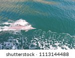 dolphins gulf arabic | Shutterstock . vector #1113144488