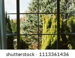 green plant view outside of... | Shutterstock . vector #1113361436