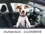 Stock photo cute dog sit in the car on the front seat closeup 1113408458