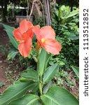 orange blooming flowers | Shutterstock . vector #1113512852