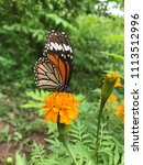 a butterfly and yellow blooming ... | Shutterstock . vector #1113512996