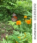a butterfly and yellow blooming ... | Shutterstock . vector #1113513152