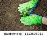 planting in the garden  hands... | Shutterstock . vector #1113608012