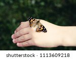 Child Holding Painted Lady Or...