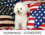bichon frise dog with american... | Shutterstock . vector #1113652592