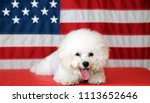 bichon frise dog with american... | Shutterstock . vector #1113652646