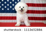 bichon frise dog with american... | Shutterstock . vector #1113652886