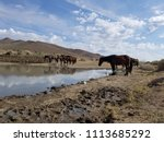several wild horses wait at a... | Shutterstock . vector #1113685292